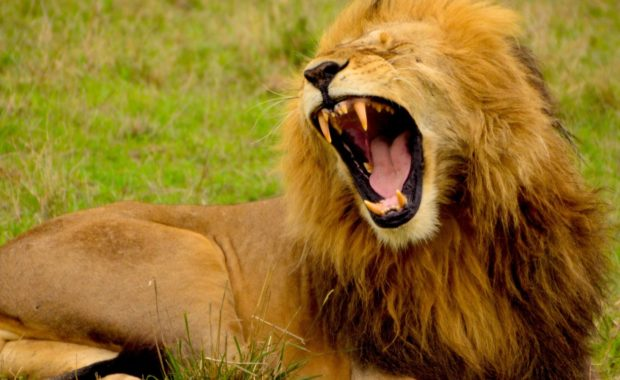 8 Endangered Animals And What You Can Do To Help Them